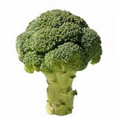Sano y lleno de vitaminas el br�coli o br�col