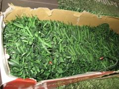 Seto artificial verde bicolor.
