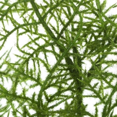 Plantas artificiales. rama esparraguera artificial 70 en la llimona home (3)