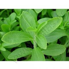 Diferentes variedades de hierbas arom�ticas