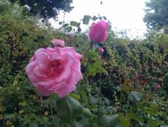 Disfruta de ntros. jardines