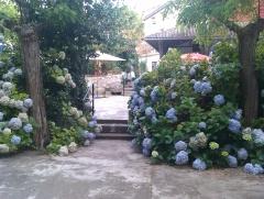 Terraza-hortensias