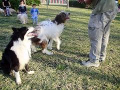 Adiestramiento y educación de perros en málaga: rincón de la victoria y torre del mar