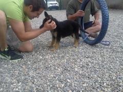 Adiestramiento y educación de cachorros en málaga: rincón de la victoria y torre del mar