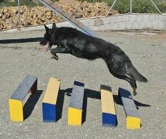 Adiestramiento y educación canino en málaga: rincón de la victoria y torre del mar