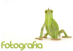 Fotografía Camaleón, fotos mascotas, fotografía de Mascotas, Fotos de Animales
