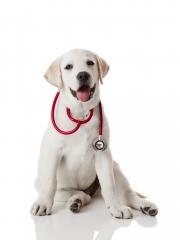 Clinica veterinaria La Favorita