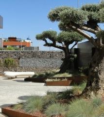 Jardin en edificio de oficinas