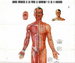 puntos acupuntura
