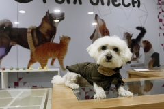 Clienta de runrunela, peluquer�a canina en pamplona, burlada, huarte, villava, ansoain, sarriguren..