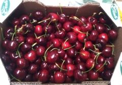 Cerezas - espa�a - zaragoza - ricla frutas agrotrain s.l