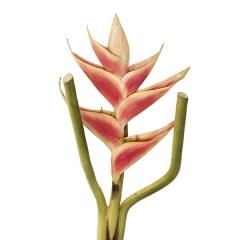 Flores artificiales. flor heliconia artificial 80 - la llimona home