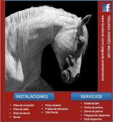 Foto 24 animales y mascotas en Guadalajara - Yeguada Andrés Molina, S.l.
