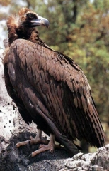 Rutas ornitológicas en extremadura, misierradegata
