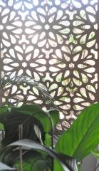 Celosia floreada