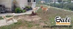 La residencia sin jaulas para su mascota en la provincia de Pontevedra