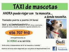 Taxi las 24 horas para su mascota en pontevedra