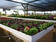 Plantas, �rboles, asesoramiento
