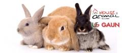 Amplia gama de productos para conejos, rabbits, lapins