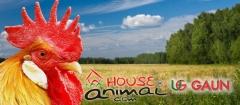 Amplia gama de productos para aves, poultry, volailles