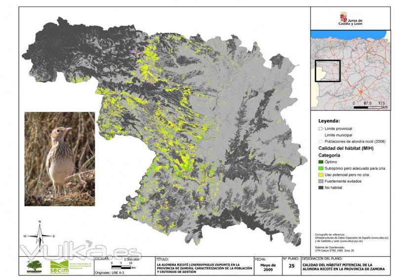 Modelos predictivos distribución fauna (alondra ricotí)