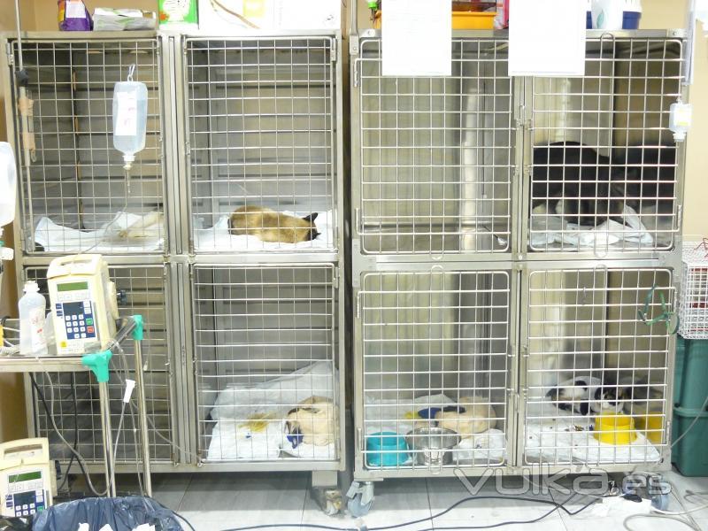 Feres cl nica veterinaria - Clinicas veterinarias ourense ...