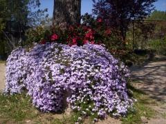 Centro de jardiner�a la berrocosa - foto 15