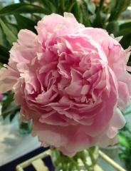Melero floristas - foto 31
