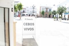 EN LA PLAZA DEL AYUNTAMIENTO JUNTO AL BANCO POPULAR, CEBOS VIVOS