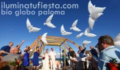 GLOBO PALOMA BIO, IDEAL PARA SUELTA DE GLOBOS