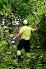 Poda preventiva de árboles
