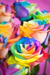 Flores con tratamiento de color