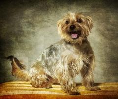 foto mascotas