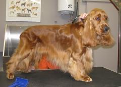 Foto 9 animales y mascotas en Cuenca - Peluquería Canina Pelanas 64