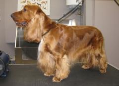 Foto 3 animales y mascotas en Cuenca - Peluquería Canina Pelanas 64
