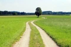 El camino a tu futuro