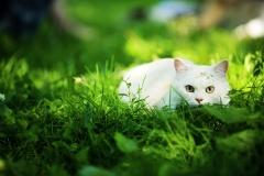 Dieta barf para gatos - puromenu.es