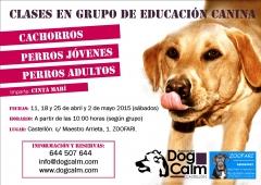 Clases en grupo para cachorros, jóvenes y adultos, en castellón
