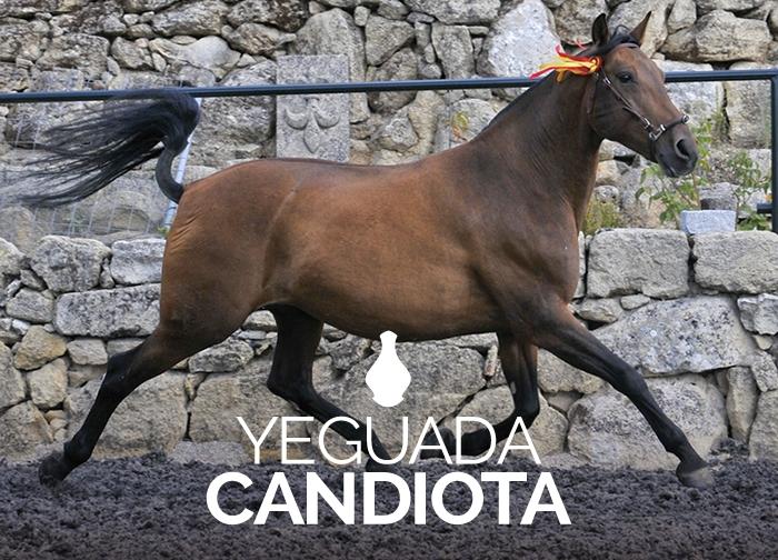 Yeguada Candiota
