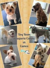 Dog room - foto 20