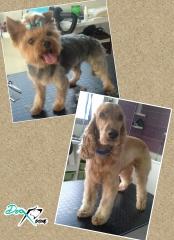 Foto 16 animales y mascotas en Cuenca - Dog Room