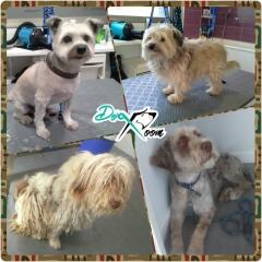 Foto 11 animales y mascotas en Cuenca - Dog Room