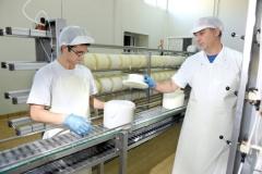 Elaboraci�n del queso Dehesa de Los Llanos
