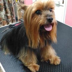 Curro en la peluqueria canina rosalia garcia de cordoba