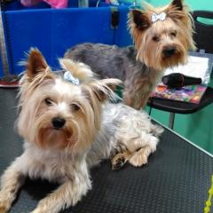 Marco y bruno en la peluqueria canina rosalia garcia de cordoba