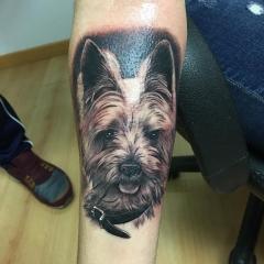 Tatuaje realista retrato de perro yorskshire