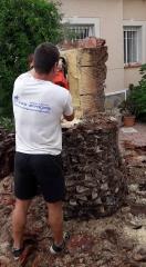 poda de palmeras torrevieja