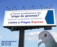 Plaga de palomas Las Palmas