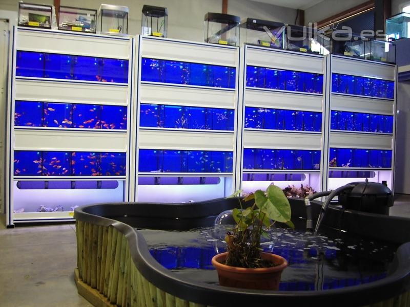 Torremascotas s l for Variedades de peces de agua fria para acuario