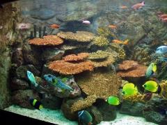 Zooaquarium madrid, aquadec